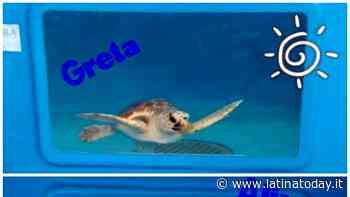 Greta e Alive, le due tartarughe salvate in mare saranno liberate al largo di Gaeta - LatinaToday