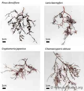 New method for capturing carbon via root exudates in wild forest - EurekAlert