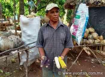 Aprovechan lluvias en Peto - El Diario de Yucatán