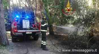 Pescara, secondo incendio nella Pineta dannunziana: forse c'è un piromane - Il Messaggero