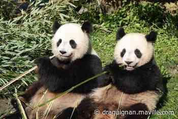Déconfinement. Le zoo de Beauval doit rouvrir le 2 juin - maville.com