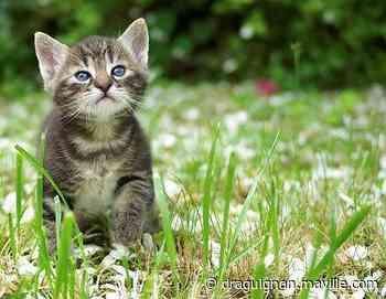 Un chaton naît avec deux têtes aux États-Unis - maville.com