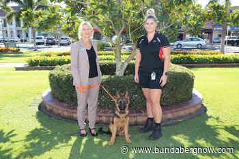 Free dog rego as part of Operation Wanted – Bundaberg Now - Bundaberg Now