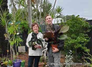 Pandemic grows popularity of indoor plants – Bundaberg Now - Bundaberg Now