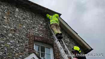 Fire crews save swift stuck in eaves of Climping house