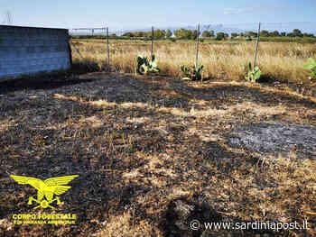 Ritorna anche la piaga degli incendi: roghi a Milis, Sarroch e Narbolia - SardiniaPost