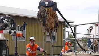 Mackay's 3-tonne fatberg blamed on coronavirus panic-buying - ABC News