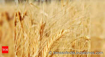 Goa: Amended agriculture market act awaiting government approval - Times of India
