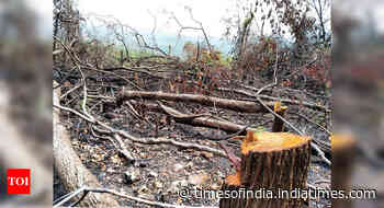 Goa: Two arrested for cutting, burning trees in Mhadei Wildlife Sanctuary - Times of India
