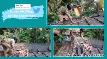 Viral video: Goa forest official rescues cobra with bare hands - The Indian Express