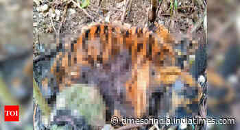 In a first, Goa uses imported kits to crack tigers poaching case - Times of India