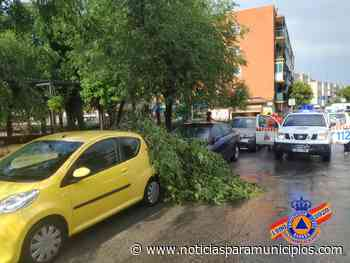 SAN FERNANDO DE HENARES/ La tormenta pasa factura con dos árboles caídos - Noticias Para Municipios