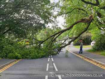 Tree falls on Chapeltown Road, Bromley Cross - The Bolton News