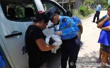 Rescatan a bebé abandonado en solar baldío de Concepción, Copán - La Prensa de Honduras