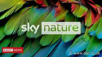 Sky Q kicks off HDR support starting with on-demand nature shows