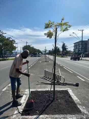 Avenida Santos Dumont receberá 26 mudas de árvores nativas - Diário do Litoral