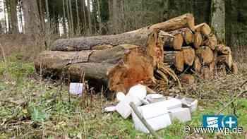 Altkreis Brilon: Wo wilde Müllkippen zum Problem werden - Westfalenpost