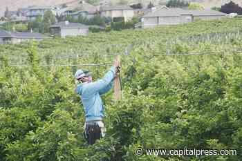 Apple exports down due to COVID-19 | Orchards, Nuts & Vines - Capital Press