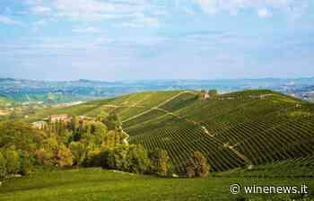 In viaggio con WineNews nella storica tenuta di Fontanafredda, tra le più belle realtà del Barolo - WineNews