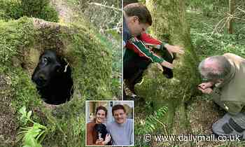 Missing dog rescued after being trapped in root 'tomb'