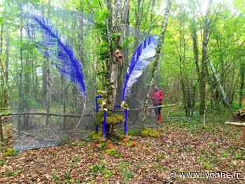 Une nouvelle installation d'Alain Bresson dans la forêt des géants, à Argentenay - Argentenay (89160) - L'Yonne Républicaine
