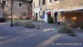 Trastevere: ulivi tagliati a piazza Sonnino, denunciato il vandalo