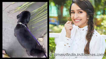 Shraddha Kapoor takes her 'Shyloh babu' on an evening walk, and the video is too cute to handle!