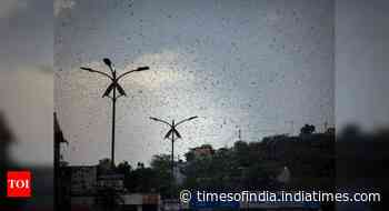 Locusts reach Jhansi, other UP districts on alert