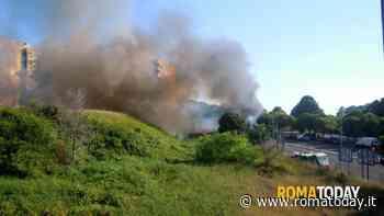 """Incendi boschivi, RomaNatura punta sui volontari: """"Aiuteranno i guardiaparco"""""""
