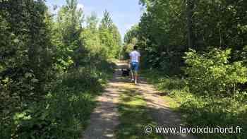 Découvrir le bois de la Tassonnière, à Cysoing - La Voix du Nord