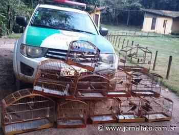 Ibatiba: pássaros mantidos em cativeiro são resgatados pela Polícia Ambiental - Jornal FATO