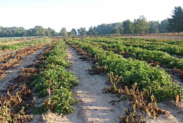 Washington growers nearing 'crunch time,' ready to bury excess potatoes