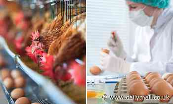 Salmonella explosion as 12 farms that sell produce to supermarkets are found to be infected