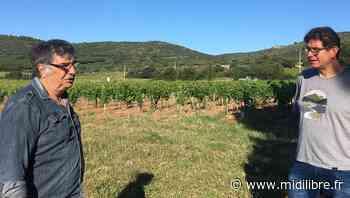 Frontignan : face à la crise sanitaire, les vignerons muscatiers réclament de l'aide - Midi Libre