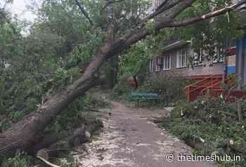 Hurricane in the Chelyabinsk region massively knocked down trees - The Times Hub