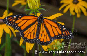 Drive-by farewell for Butterfly Gardens of Saugeen Shores co-founders - Shoreline Beacon