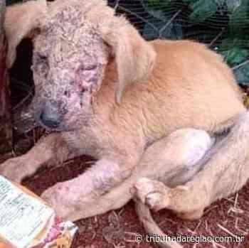Revoltante: Cão é queimado com água fervente em Marialva - Arial