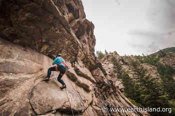Rock Climbing Can Pose Threat to Cliff-Dwelling Birds, but May also Offer Opportunity - Earth Island Journal
