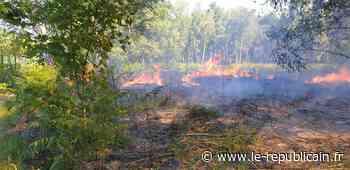 Essonne : incendie forêt de la Grange à Yerres - Le Républicain de l'Essonne