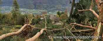 Si può tornare a fare pulizia nei boschi - Economia, Cosio Valtellino - La Provincia di Sondrio