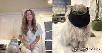 WATCH: Kate Beckinsale's cat wears mask in video urging people to make NHS scrubs - Wamiz.co.uk