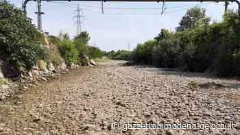 Formigine. Il torrente Fossa è in secca Moria di pesci, accuse a una ditta - La Gazzetta di Modena