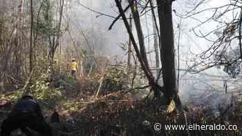 Controlan incendios forestales en Sitionuevo, Magdalena - El Heraldo (Colombia)