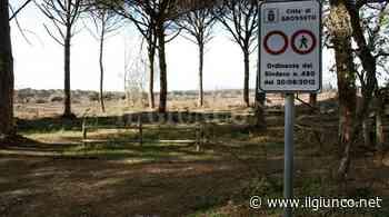 Nella pineta del Tombolo nasce il parco didattico ambientale - IlGiunco.net