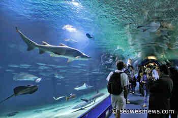 Seafood champs stir the pot to help Vancouver Aquarium - SeaWestNews