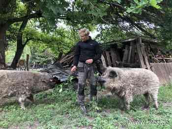 Naturschutzcamp: Mit Schweinen im grünen Klassenzimmer von Neuenhagen - Märkische Onlinezeitung