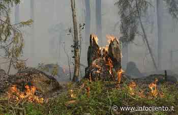 Rischio incendi: ad Agropoli fino a 10mila euro di multa per chi li provoca - Info Cilento