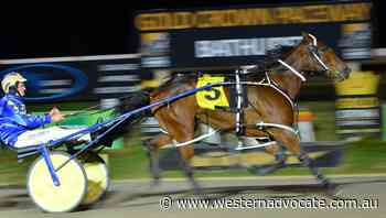 Holy Camp Dillon makes it two from two for his new trainer John Boserio - Western Advocate