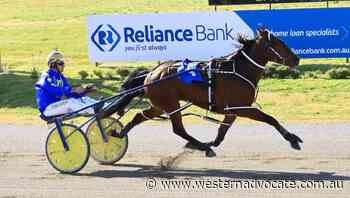 Holy Camp Dillon won his first start for John Boserio, now the trainer is aiming for more success - Western Advocate