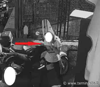 Terni: pitbull azzanna una donna, la proprietaria le inveisce contro e se ne va. Denunciata dalla Polizia - Terni in rete